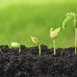 engrais organiques - fertilisants - culture